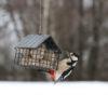 czarny karmnik dla ptaków z siatki metalowej WildlifeGarden