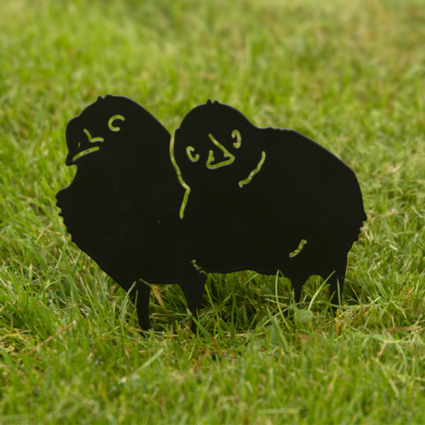 zdjęcia dwóch kurczaczków na trawie